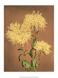 Yellow Chrysanthemums, Vintage Japanese Photography Posters by Ogawa Kasamase