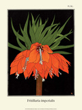 Botanical Print, Crown Imperial, 1905 Prints by Luite Klaver