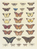 Meadow Butterflies Giclee Print by Maria Mendez