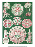 Art Forms of Nature, Discomedusae Prints by Ernst Haeckel