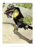 Bird Illustration, The Toucan, 1899 Poster by Edward Detmold