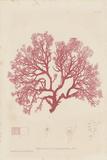 Sphaerococcus Giclee Print by Henry Bradbury