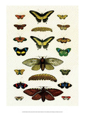 Butterflies, Moths and Caterpillar Print by Albertus Seba