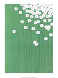 Field Daisies Art by Takashi Sakai