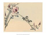 Japanese Birds on a Branch Prints by Haruna Kinzan