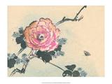 Japanese Peony Flower Posters by Haruna Kinzan