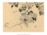 Japanese Bird in Cherry Blossom Nest Prints by Haruna Kinzan