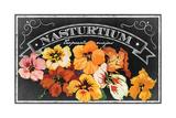 Nasturtium Blooms Giclee Print