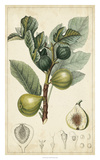 Exotic Fruits I Giclee Print by  Turpin
