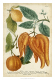 Exotic Citrus I Giclee Print by  Weinmann