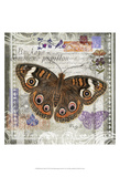 Butterfly Artifact II Prints by Alan Hopfensperger