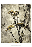 Big Sur Yarrow II Prints by Honey Malek