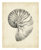 Antique Shell Study I Giclee Print by Ethan Harper