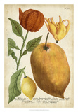 Exotic Citrus II Giclee Print by  Weinmann