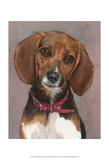 Lucy English Pocket Beagle Prints by Edie Fagan