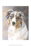 Maddie Australian Shepherd Prints by Edie Fagan
