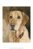 Houston Yellow Lab Poster by Edie Fagan
