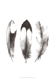 Watercolor Feathers II Prints by Grace Popp