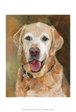 Rex Golden Retriever Prints by Edie Fagan