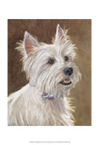 Mac West Highland Terrier Poster by Edie Fagan
