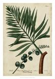 Vintage Tropicals IV Giclee Print by  Weinmann