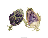 Watercolor Artichoke Premium Giclee Print by Michael Willett
