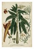 Vintage Tropicals II Giclee Print by  Weinmann