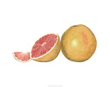 Watercolor Grapefruit Premium Giclee Print by Michael Willett