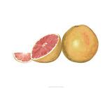 Watercolor Grapefruit Premium Giclee Print by Michael Willett