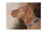 Bowden Vizsla Prints by Edie Fagan