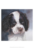 Minnie Springer Spaniel Prints by Edie Fagan