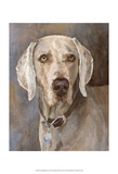 Tate Weimaraner Prints by Edie Fagan