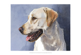 Reggie Yellow Lab Posters by Edie Fagan