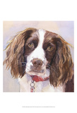 Georgia Springer Spaniel Prints by Edie Fagan