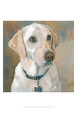 Kaley Yellow Lab Poster by Edie Fagan