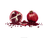 Watercolor Pomegranate Premium Giclee Print by Michael Willett