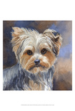 Sadie Belle Yorkshire Terrier Print by Edie Fagan