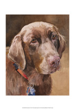 Bell Chocolate Lab Prints by Edie Fagan