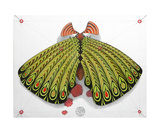 Green Moth Reprodukcja zdjęcia autor Federico Cortese