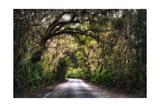 Southern Plantation Road Photographic Print by George Oze