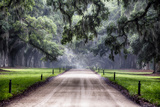 Plantation Road, Charleston, South Carolina Photographic Print by George Oze