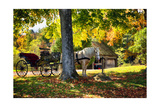 Horse-drawn Carrieage Under A Tree Photographic Print by George Oze