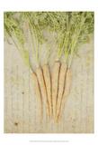 Herb Still Life III Print by Irena Orlov