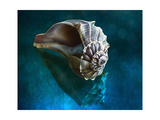 Aquatic Dreams IV Photographic Print by George Oze