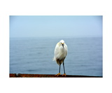 Egret Photographic Print by Janet Duffey