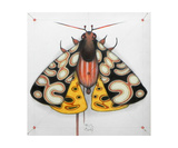 Moth Photographic Print by Federico Cortese