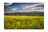 Napa Valley Spring Meadow, California Photographic Print by George Oze