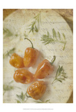Herb Still Life VI Prints by Irena Orlov