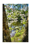 Canal Side Flowering Tree Photographic Print by George Oze