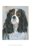 Woody Tricolor CKC Spaniel Prints by Edie Fagan